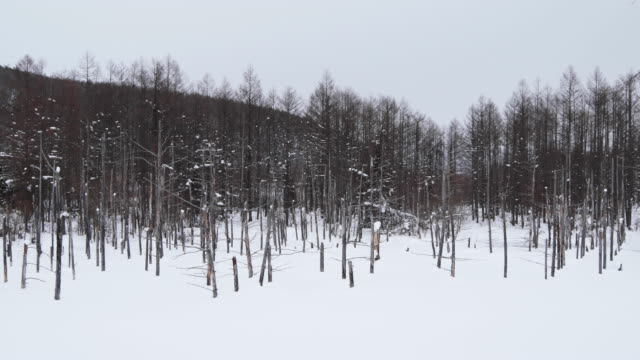 wide, winter forest in japan - kamikawa subprefecture stock videos and b-roll footage