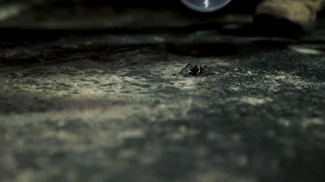 wideshot of small spider being caught in container by human - animal abdomen stock videos and b-roll footage