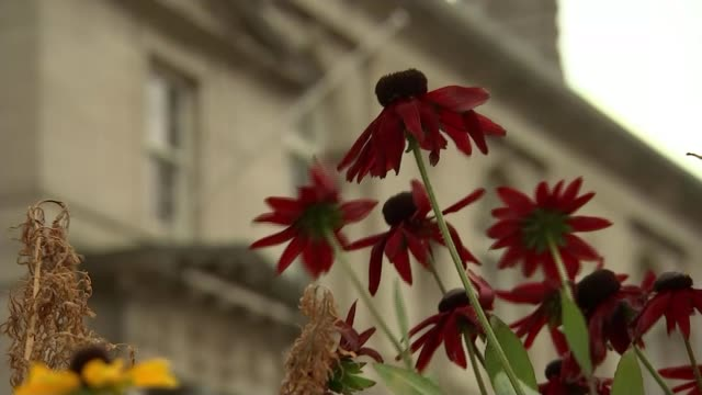 'widespread systemic failure' in rotherham abuse scandal england south yorkshire rotherham ext reporter to camera red flowers blowing in wind... - rotherham stock videos & royalty-free footage