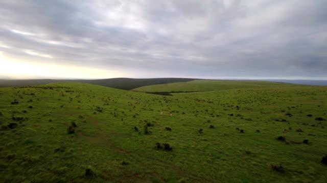 vídeos de stock, filmes e b-roll de wild africa - ecoturismo