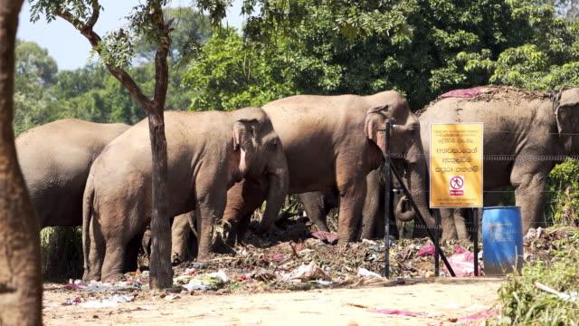 野生のアジアゾウがゴミを食べる,スリランカ - スリランカ点の映像素材/bロール