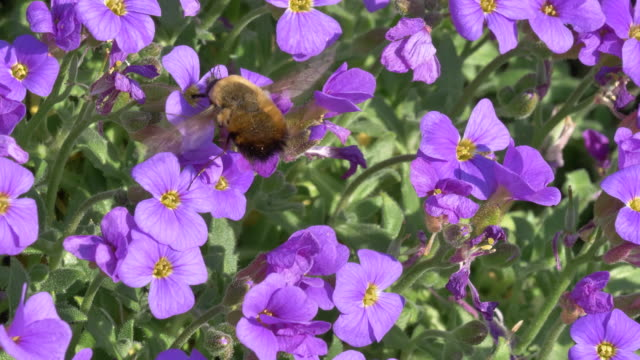 wild bee foraging - foraging stock videos & royalty-free footage