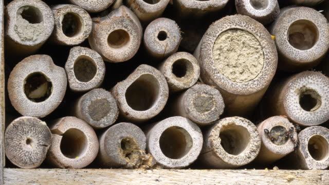 wild bee lay an egg - pollen grain stock videos & royalty-free footage