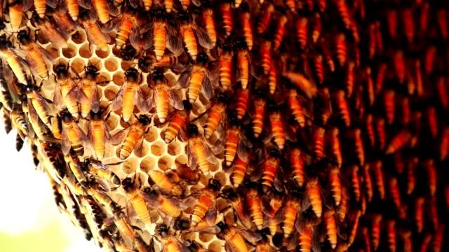 wild bees - nest stock-videos und b-roll-filmmaterial