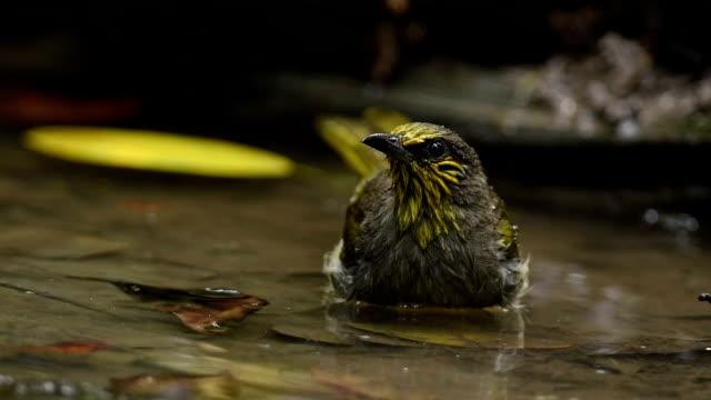 vídeos y material grabado en eventos de stock de aves silvestres y salpicaduras de agua potable - baño para pájaros