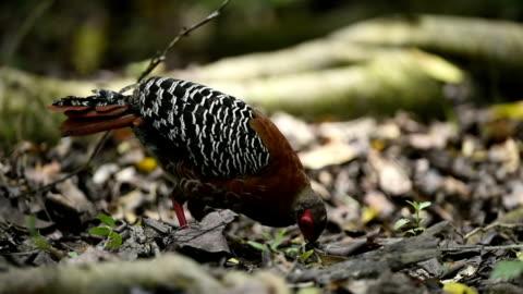wild vögel füttern im dschungel - baumstumpf stock-videos und b-roll-filmmaterial