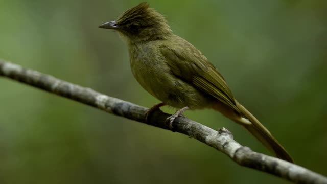 wild vögel füttern im dschungel - tier rücken stock-videos und b-roll-filmmaterial