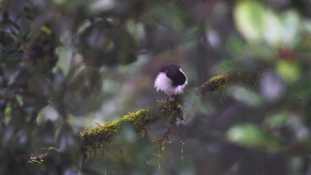 vidéos et rushes de wild bird - partie du corps d'un animal