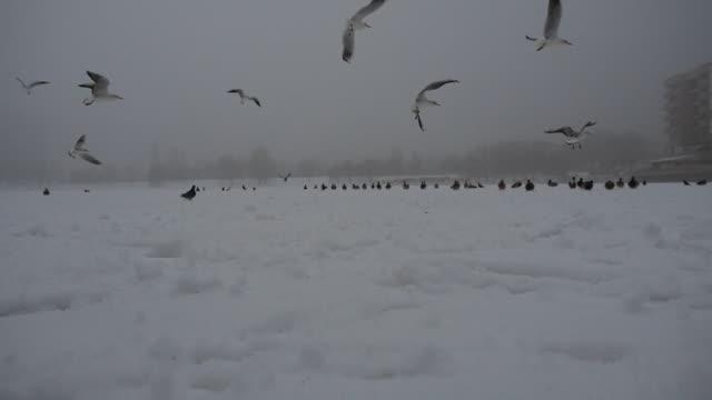 Vogelstand verzamelen in mistige winterweer