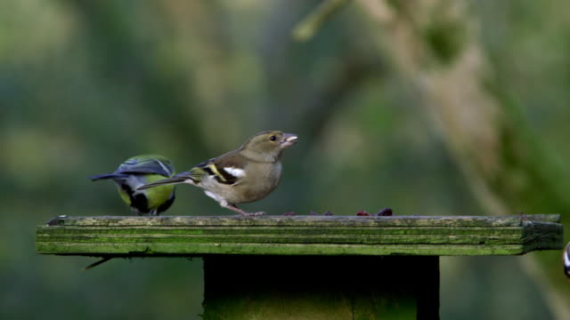 wild birds on feeder - medium group of animals stock videos & royalty-free footage