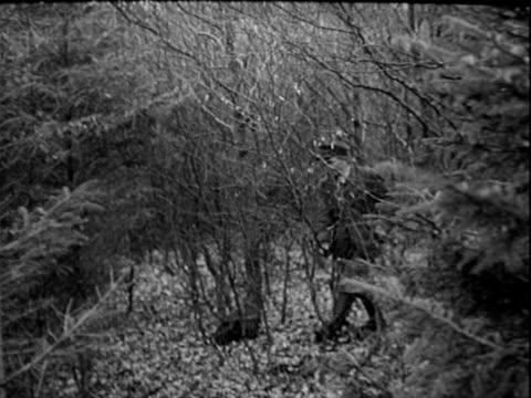wild boar hunt - 1940 stock videos & royalty-free footage