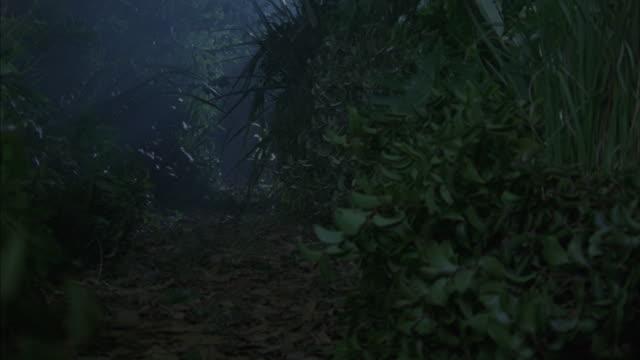 vídeos de stock, filmes e b-roll de a wild boar scurries through a dense jungle. - animals in the wild