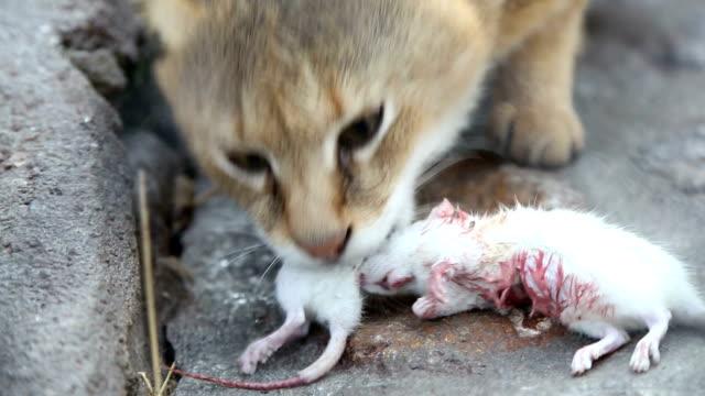 Wild cat eats little white mice