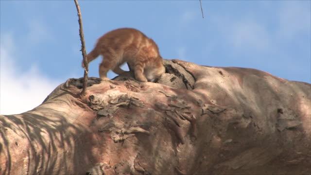 野生の猫 - 迷子の動物点の映像素材/bロール