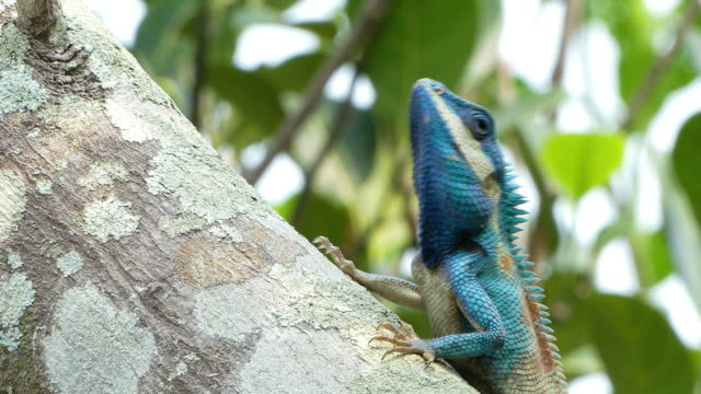 wild chameleon - endangered species stock videos & royalty-free footage