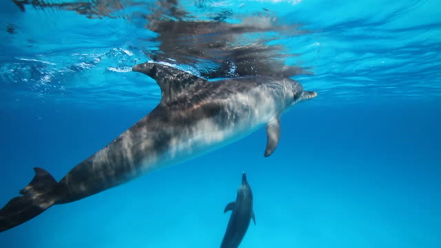 wild dolphin - dolphin stock videos and b-roll footage