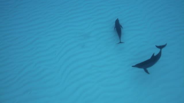 delfinen bei der jagd - delfin stock-videos und b-roll-filmmaterial