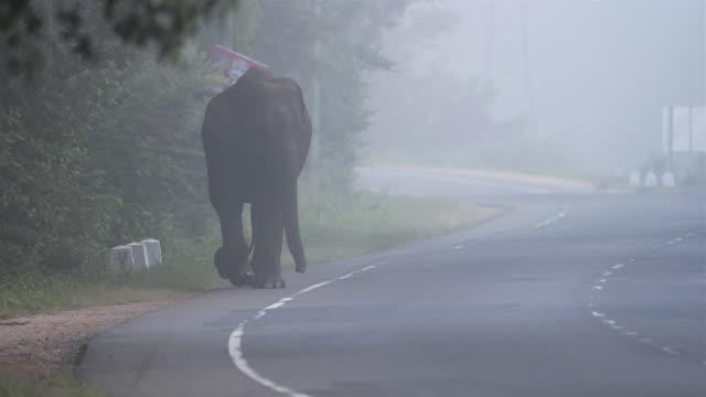 wild elephant in traffic, sri lanka - sri lanka stock videos & royalty-free footage