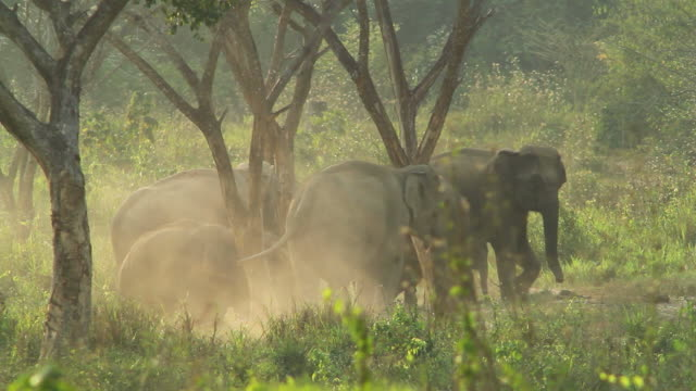 wild elephant - documentary footage stock videos and b-roll footage