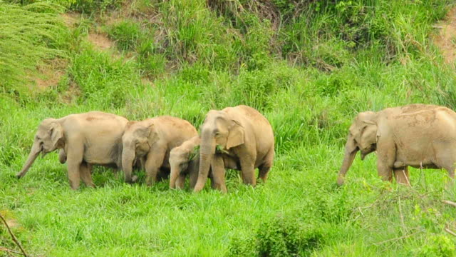 wild elephants - documentary footage stock videos and b-roll footage