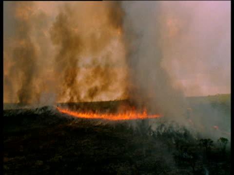 wild fire sweeps over dry grassland - dominering bildbanksvideor och videomaterial från bakom kulisserna