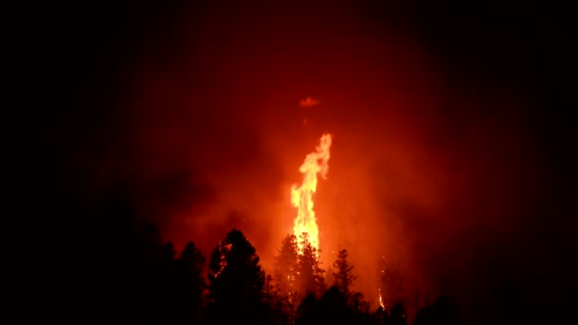 wild fire - natural disaster stock videos & royalty-free footage