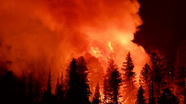 wild fire - waldbrand stock-videos und b-roll-filmmaterial