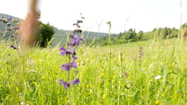 wild flowers in the meadow and the wind - wildflower stock videos & royalty-free footage