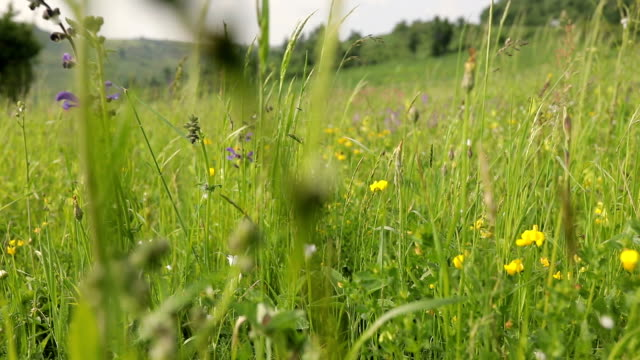 wild flowers in the meadow and the wind - daisy stock videos & royalty-free footage
