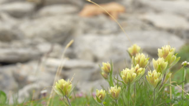 wild flowers seen while hiking. - dirt track stock videos & royalty-free footage