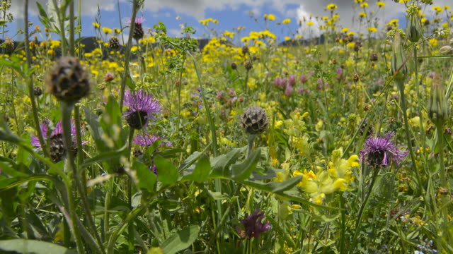 wild flowers - zoom in stock videos & royalty-free footage
