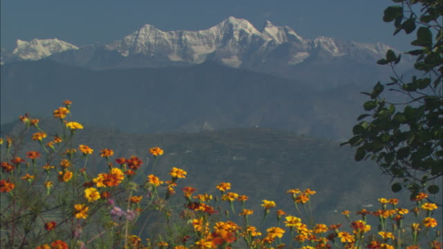 ws, wild flowers with himalayan mountains in background, india - valley stock videos & royalty-free footage