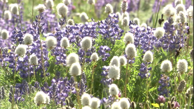 wild flowers, wyoming, usa available in hd - wildblume stock-videos und b-roll-filmmaterial