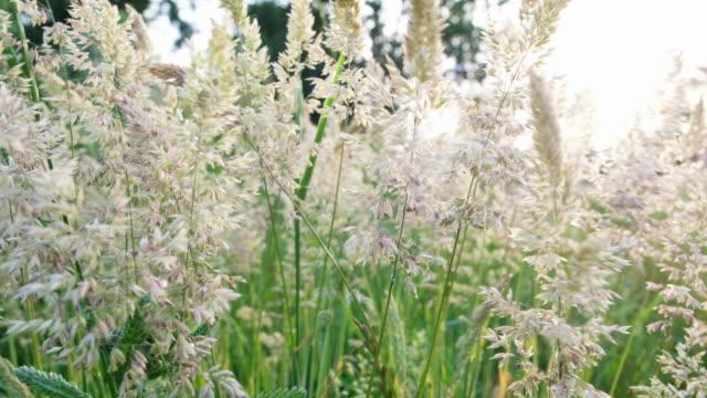 stockvideo's en b-roll-footage met wild gras op een gebied - springtime