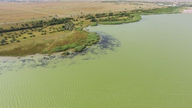 antenn: vilda gröna gräset sockerrör på sjön i blåsig soliga dag - uppdämt vatten bildbanksvideor och videomaterial från bakom kulisserna