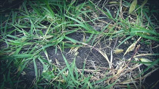 vídeos y material grabado en eventos de stock de hierba salvaje - bieldo equipo agrícola
