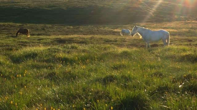 Wild Horse on Dublin Mountains