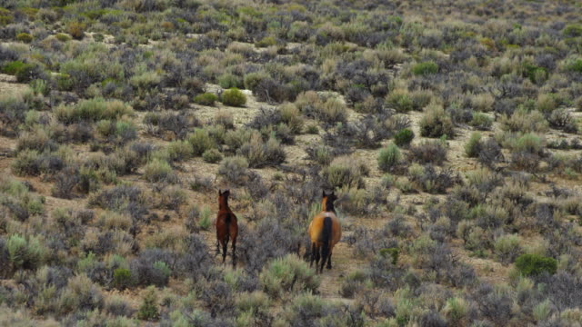 wild horse pair running in landscape - animals in the wild stock videos & royalty-free footage