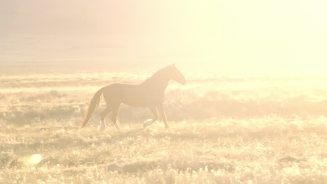 Wild horse runs through a field and past the sun peaking over mountain top