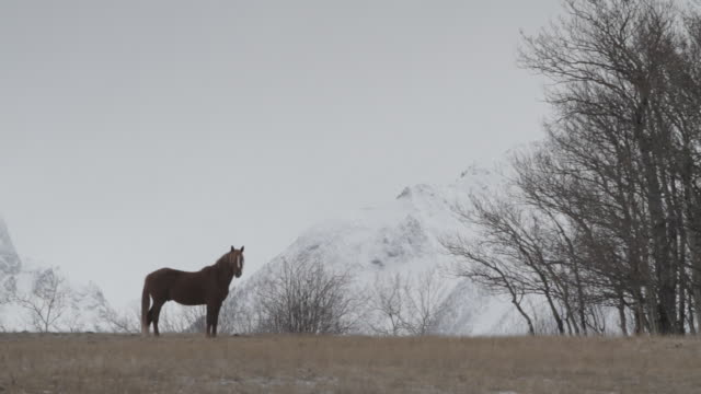 wild horse - wide shot stock videos & royalty-free footage
