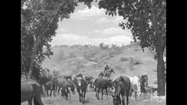 WS wild horses being herded by cowboys through desert terrain / close view of horses running / wider view of horses running / horses herded down...