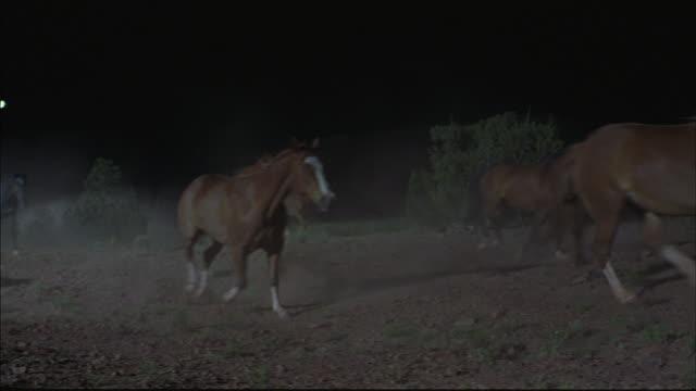Wild horses gallop through the desert.