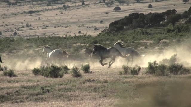 ws, pan, wild horses galloping in field, usa - galoppera bildbanksvideor och videomaterial från bakom kulisserna