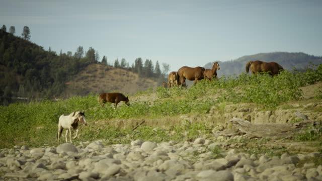 野生の馬に触れるのフィールド - 雄馬点の映像素材/bロール
