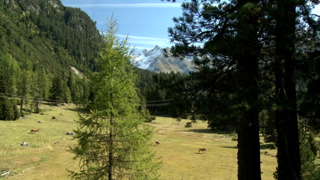 wild horses grazing on alpine meadow - horse family stock videos and b-roll footage