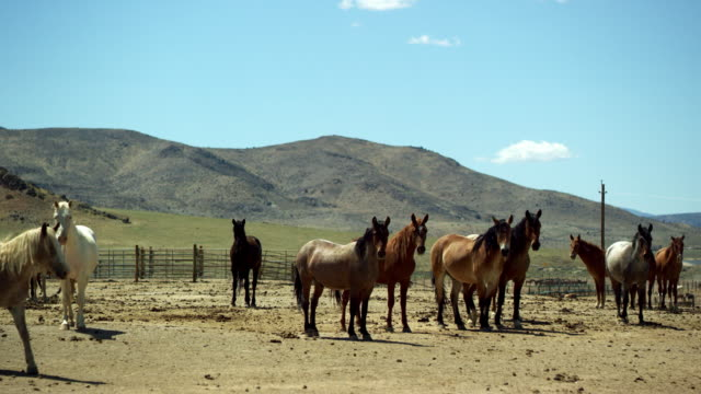 wild horses in corral - corral stock videos & royalty-free footage