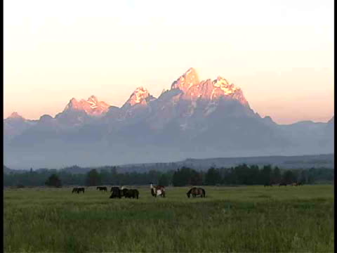 ws, wild horses in field at sunrise, teton mountains in background , grand teton national park, wyoming, usa - alm stock-videos und b-roll-filmmaterial