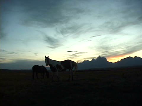 ms, wild horses in field at sunset, teton mountains in background, grand teton national park, wyoming, usa - parco nazionale del grand teton video stock e b–roll
