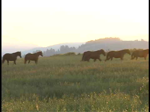 ms, pan, wild horses in field, teton mountains in morning light in background, grand teton national park, wyoming, usa - parco nazionale del grand teton video stock e b–roll