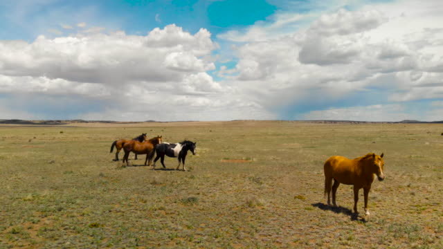 wild horses in open spaces - ranch icon stock videos & royalty-free footage